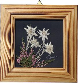 Edelweiss framed wall picture