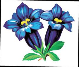 Gentian Sticker